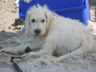 Cutest beach pup, ever.